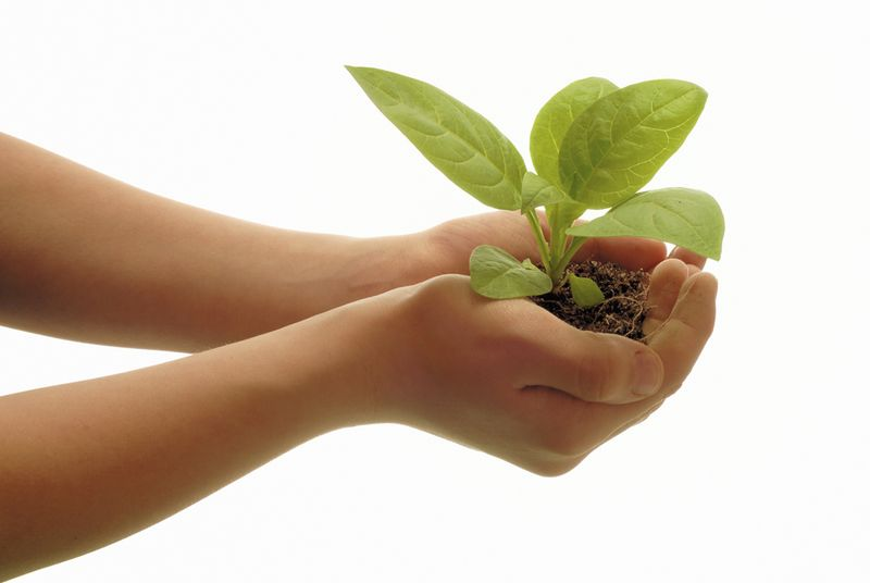 Hands-with-a-plant1